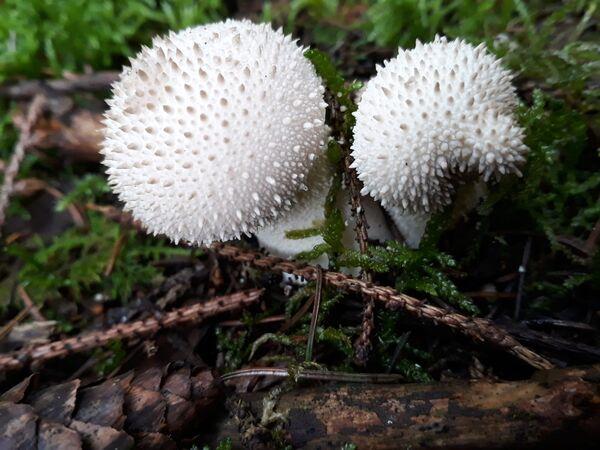 Pilzfund im Wald