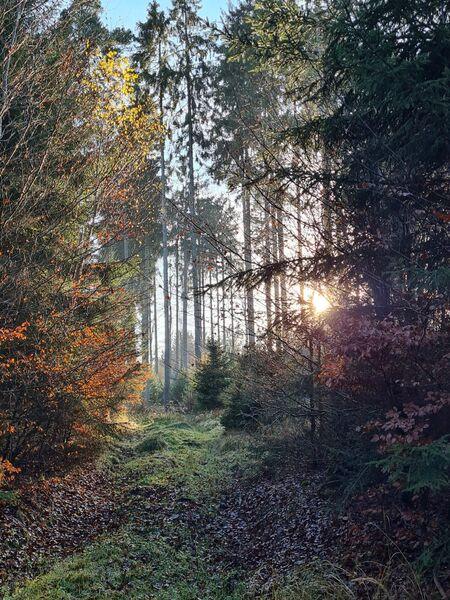 Im Wald, im Herbst